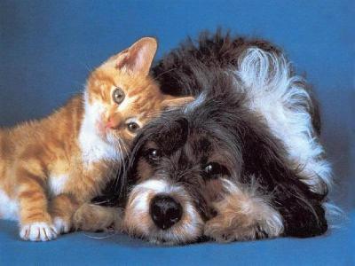 BON MERCREDI B_1_q_0_p_0.jpg?u=http%3A%2F%2Fwww.chat-mignon.com%2Fphotos%2Famitie-chat-chien