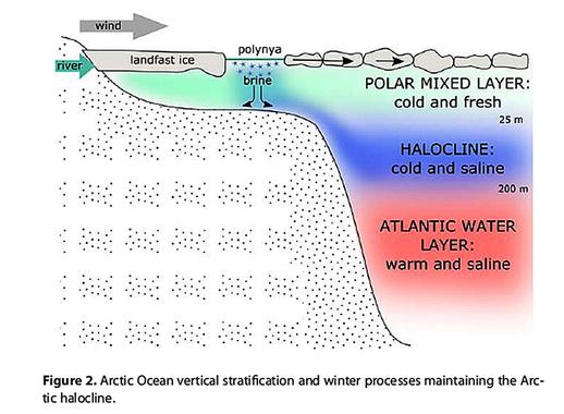 Halocline-Atlantic-Water-Itkin-2015.jpg&