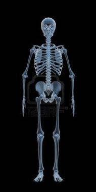 Le corps humain évoque le nom de Muhammed(SAWS) 200583squelette-bleu-radiographie.jpg?u=http%3A%2F%2Fwww.tsf-radio.org%2Fforum%2Fim%2F200583squelette-bleu-radiographie