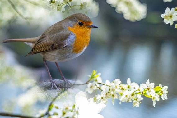 oiseau-jardin.jpg?u=https%3A%2F%2Fwww.jardiner-malin.fr%2Fwp-content%2Fuploads%2F2019%2F07%2Foiseau-jardin.jpg&q=0&b=1&p=0&a=1