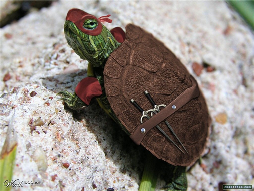[Jeu] Association d'images - Page 2 Turtle.jpg?u=https%3A%2F%2Freproductiondestortues.files.wordpress.com%2F2011%2F12%2Fturtle