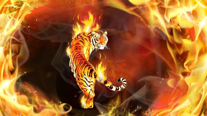 Fire Tiger HD wallpaper