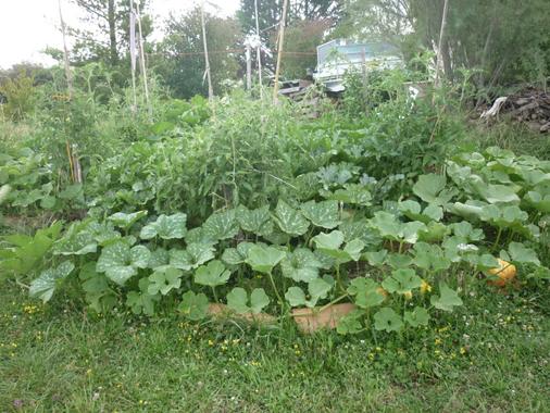 Méthode pour savoir où récolter les Plantes Sauvages ...