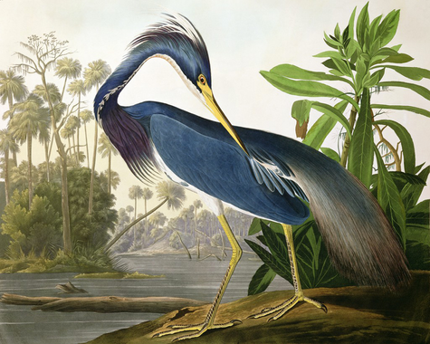 Let's keep it wild.: Non-Audubon free birds