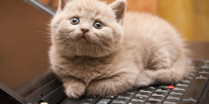 Bac : Tous les résultats effacés après que le chat de la ...