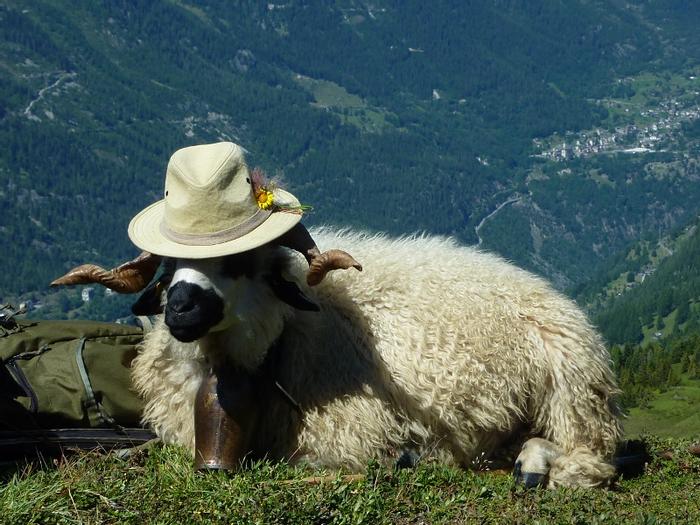 """Des élégantes  """"chapeautées"""" ... Magnum.jpg?u=http%3A%2F%2Fmoutonchapeau.unblog.fr%2Ffiles%2F2014%2F01%2Fmagnum"""